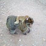 monkey forest 03