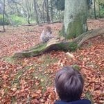 monkey forest 04
